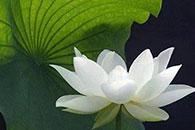 Meditation and Mindfulness